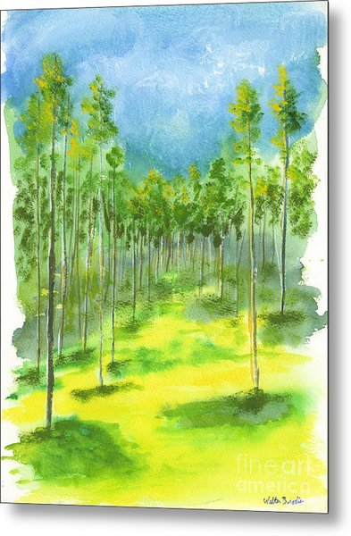 Birch Glen Metal Print