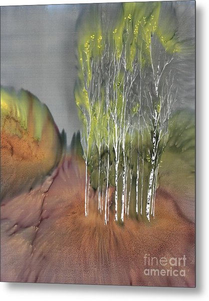 Birch Grove 1 Metal Print