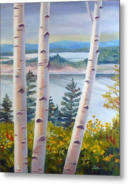 Birches In Nova Scotia Metal Print