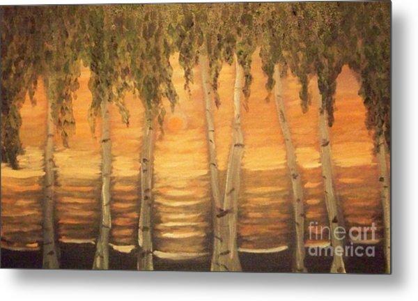Birches In The Sun Metal Print