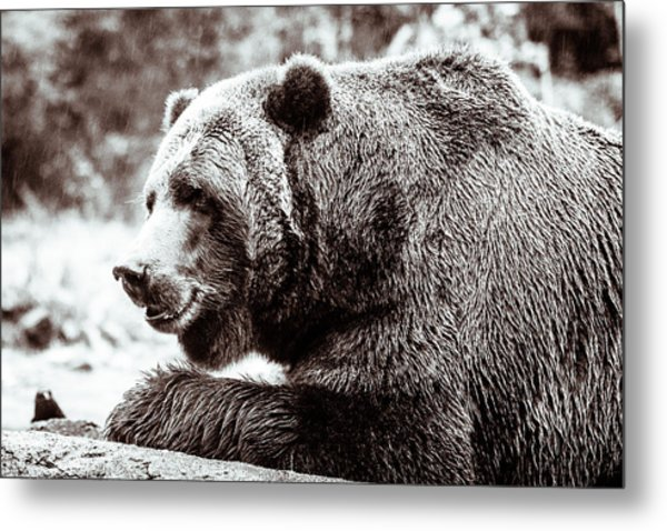 Bird And A Bear In Black And White Metal Print