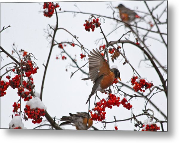 Bird And Berries Metal Print