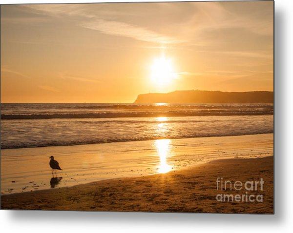Bird And His Sunset Metal Print