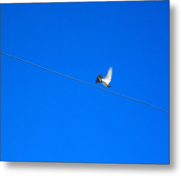 Bird And Wire Metal Print