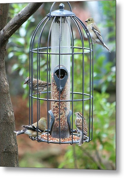 Bird Breakfast Metal Print