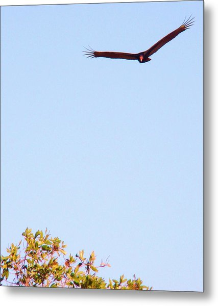 Bird In Pursuit Metal Print by Van Ness