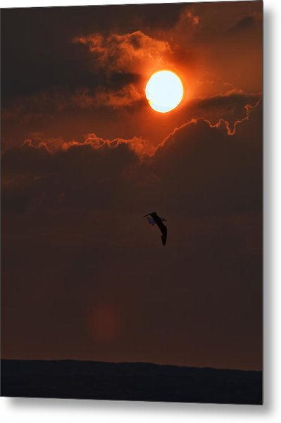 Bird In Sunset Metal Print by Tony Reddington