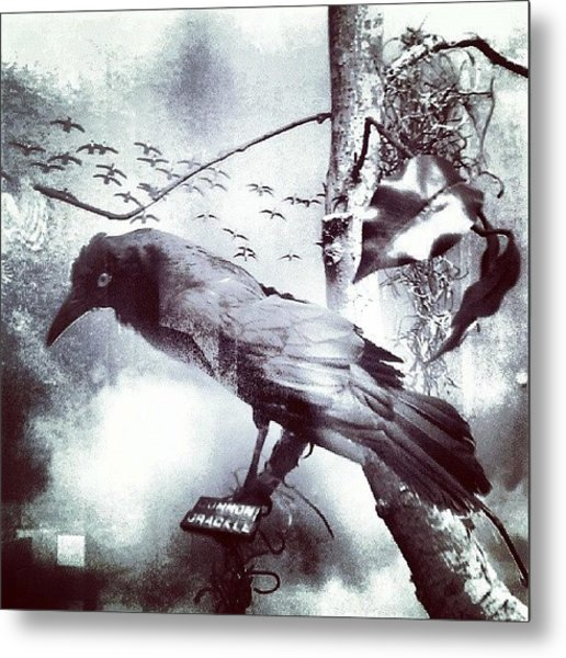 #bird Looking For #birdbath . #surreal Metal Print