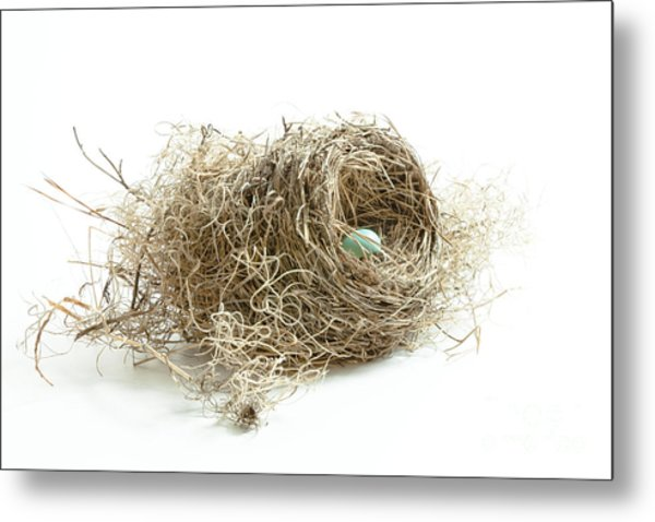 Bird Nest 1 Metal Print