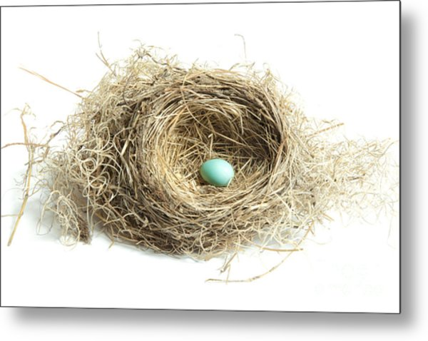 Bird Nest 2 Metal Print