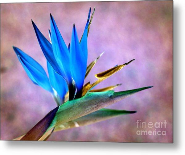 Bird Of Paradise Bloom Metal Print