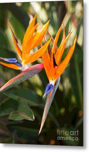 Bird Of Paradise In Flower Metal Print