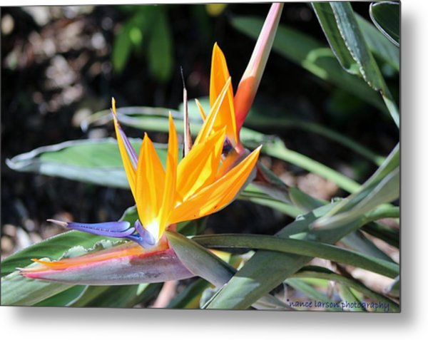 Bird Of Paradise Metal Print