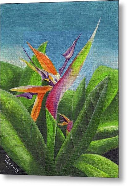 Hawaiian Bird Of Paradise Metal Print