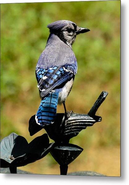 Bird On A Bird Metal Print