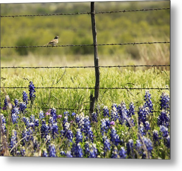 Bird On A Fence Metal Print
