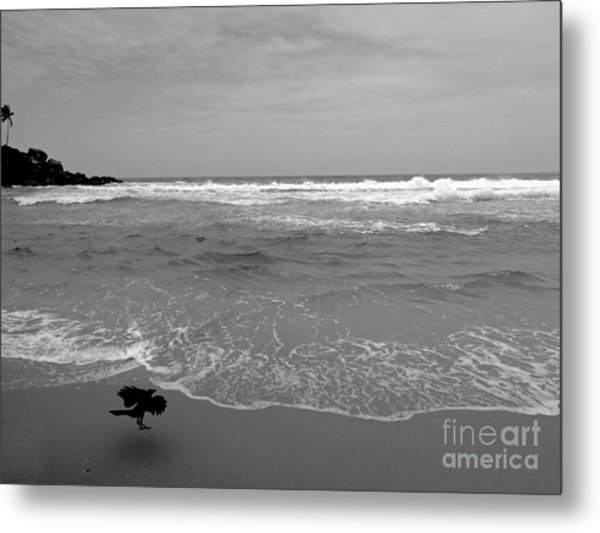 Bird On Kovalam Beach Metal Print