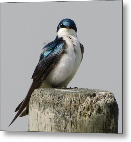 Bird On Post Metal Print