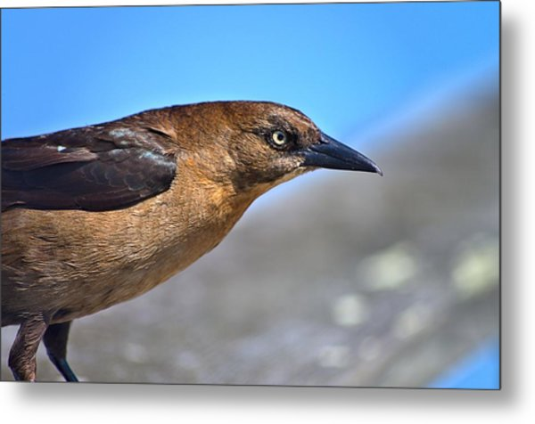 Bird On The Kure Beach Pier Metal Print