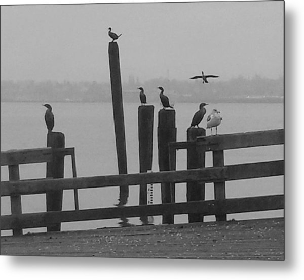 Bird Party In Black And White Metal Print