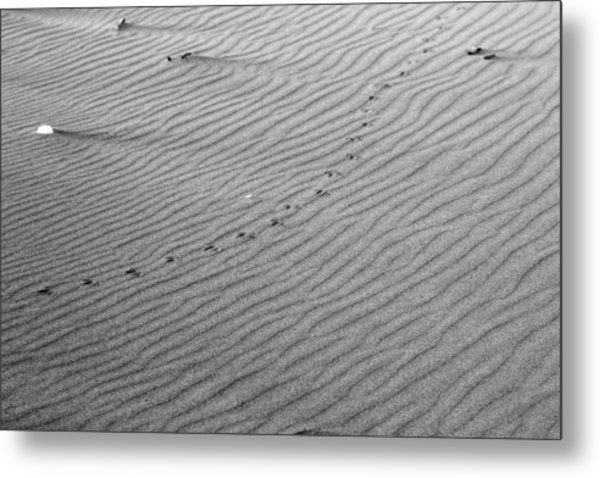Bird Prints On Beach Metal Print