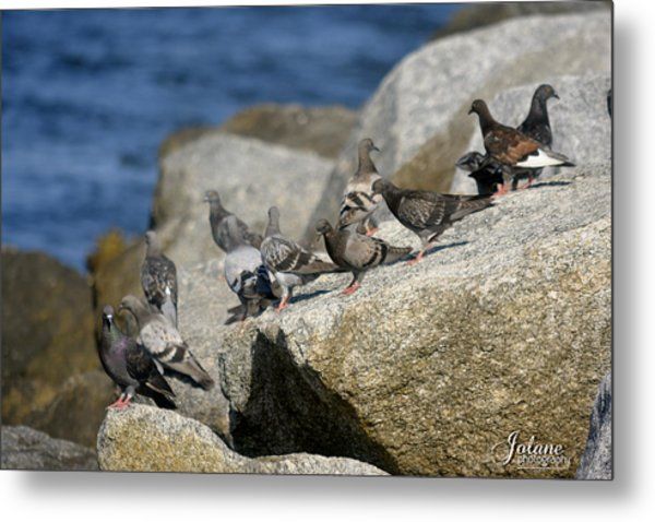 Bird Rock Beach Metal Print