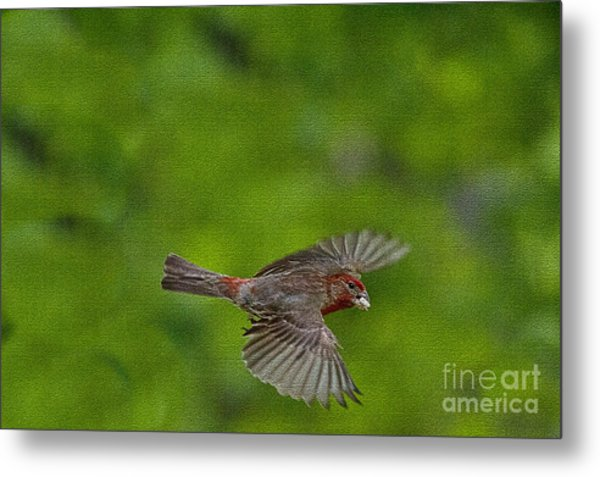 Bird Soaring With Food In Beak Metal Print