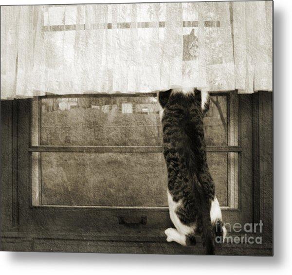 Bird Watching Kitty Cat Bw Metal Print