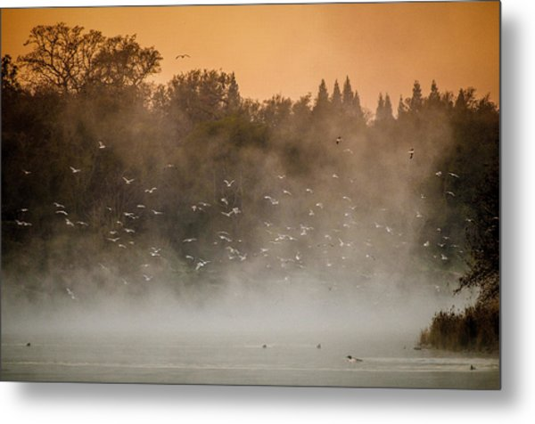 Birds And The Fog  Metal Print