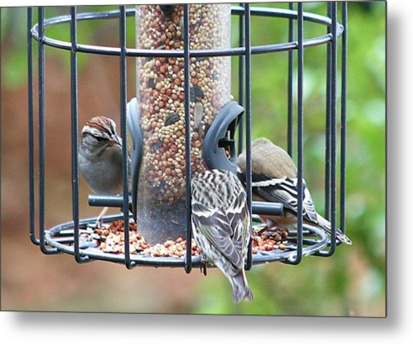 Birds At Lunch Metal Print
