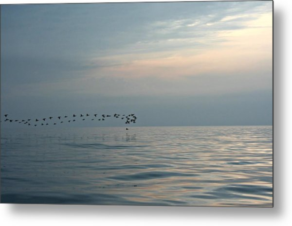 Birds At Sunset In Sister Bay Metal Print