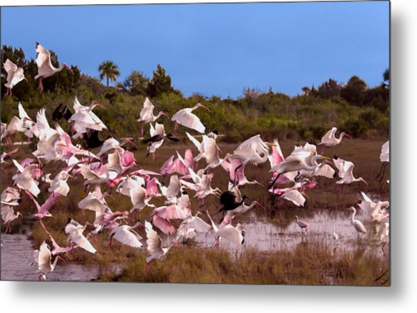 Birds Call To Flight Metal Print