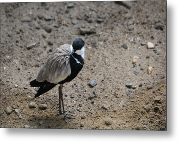 Birds Of A Feather Flock Alone Metal Print