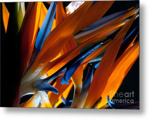 Birds Of Paradise Metal Print by Todd Edson