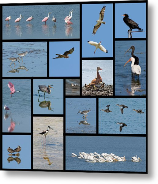 Birds Of The Click Ponds Metal Print