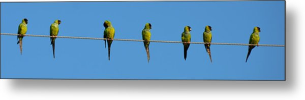 Birds On A Wire Metal Print by Julie Cameron