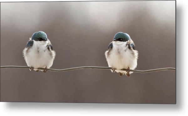 Birds On A Wire Metal Print by Lucie Gagnon