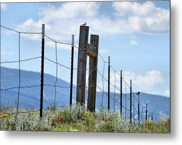 Birds On The Fence Metal Print
