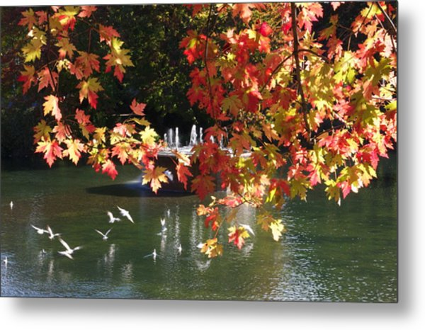 Birds Over Water Metal Print by Jocelyne Choquette