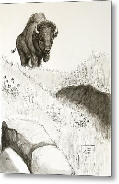 Bison Approach Metal Print