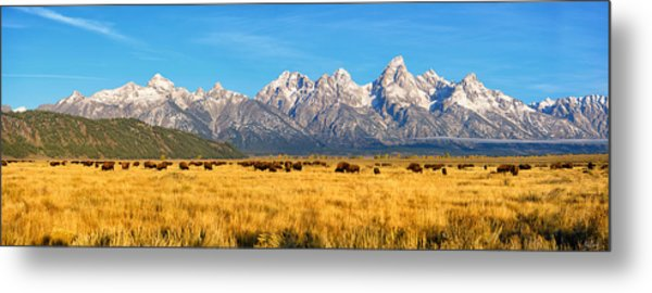 Bison Beneath The Tetons Limited Edition Panorama Metal Print
