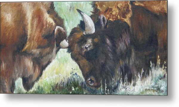 Bison Brawl Metal Print