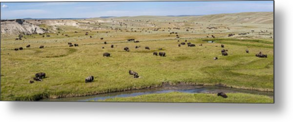 Bison Herd Metal Print