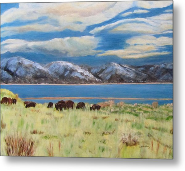 Bison On Antelope Island Metal Print