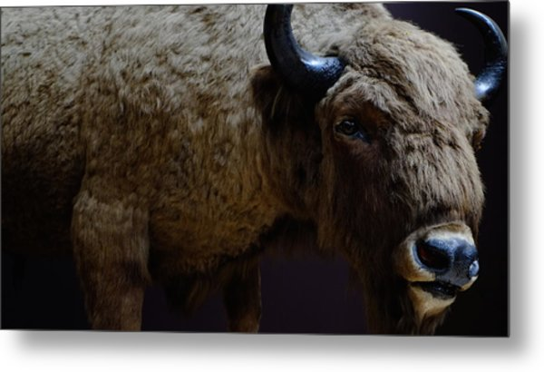 Bison Stuffed Metal Print