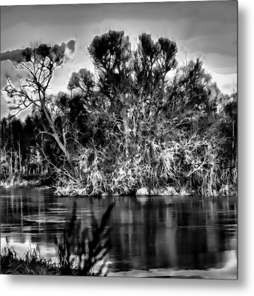 Black And White Artistic Big Tree Colored Coloured #orange By Sun On January 2 2015 Besides The Cree Metal Print