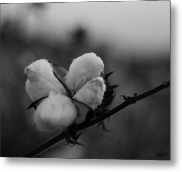 Black And White Boll Metal Print