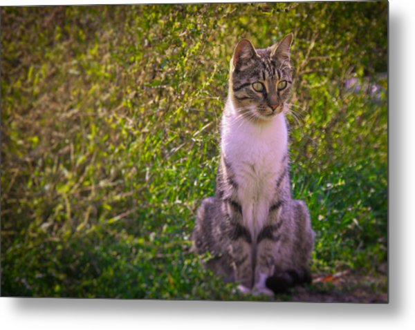 Black And White Cat In The Bush Metal Print