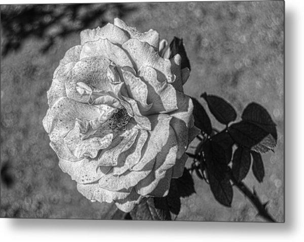 Black And White Flower #2 Metal Print