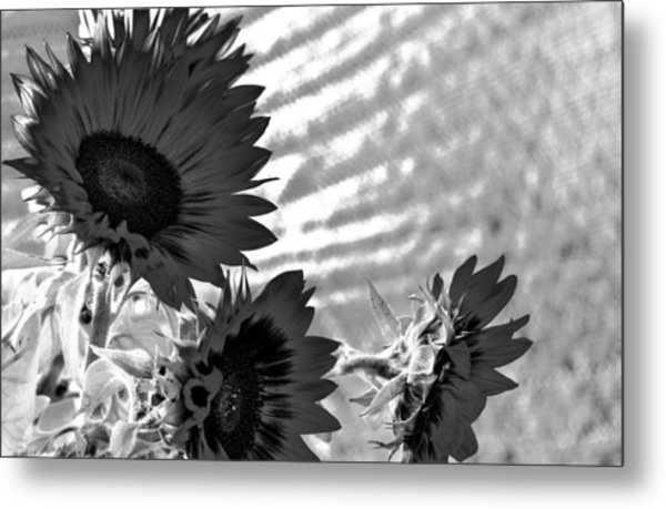 Black And White Flower Of The Sun Metal Print